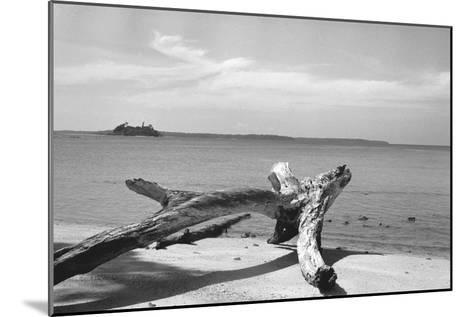 Form of Tree Trunk at Beach--Mounted Photographic Print
