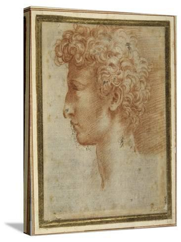 Profile of a Young Man-Parmigianino-Stretched Canvas Print