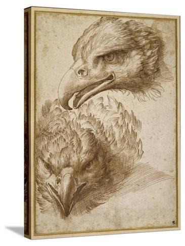 Studies of an Eagle's Head-Perino Del Vaga-Stretched Canvas Print