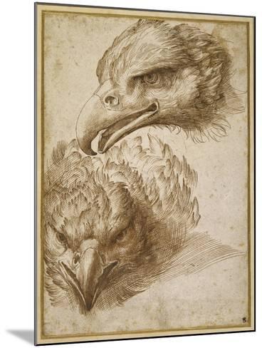 Studies of an Eagle's Head-Perino Del Vaga-Mounted Giclee Print