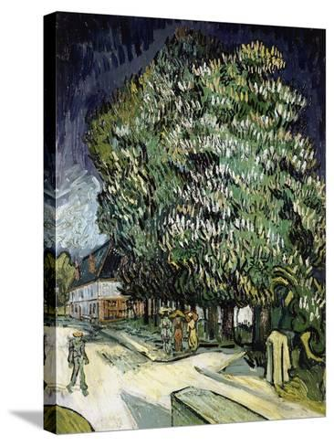 Chestnut Trees in Blossom, Auvers-Sur-Oise, 1890-Vincent van Gogh-Stretched Canvas Print