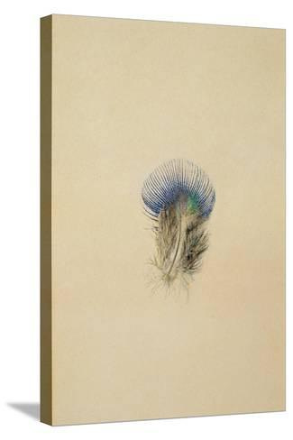 Study of a Peacock Feather, 1873-John Ruskin-Stretched Canvas Print