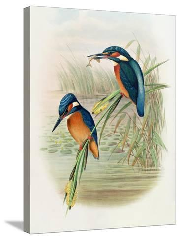 Alcedo Ispida, Plate from 'The Birds of Great Britain' by John Gould, Published 1862-73-William Hart and John Gould-Stretched Canvas Print