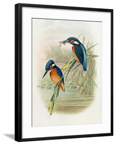 Alcedo Ispida, Plate from 'The Birds of Great Britain' by John Gould, Published 1862-73-William Hart and John Gould-Framed Art Print
