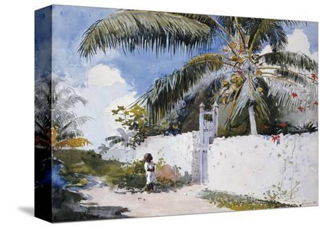 A Garden in Nassau, 1885-Winslow Homer-Stretched Canvas Print