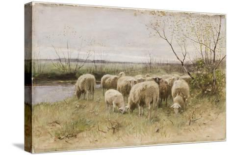 Sheep-Francois Pieter Ter Meulen-Stretched Canvas Print