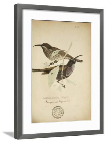 Nectarinia Cruentata, C.1863-Eduard Ruppell-Framed Art Print