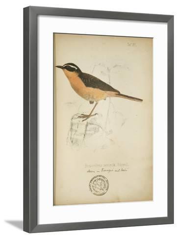 Bessonornis Semirufa, Ruppell, C.1863-Eduard Ruppell-Framed Art Print