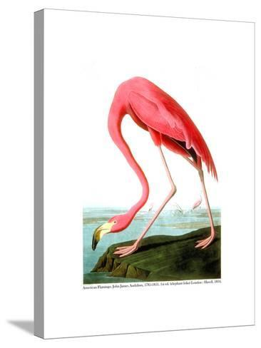 American Flamingo, 1834-John James Audubon-Stretched Canvas Print