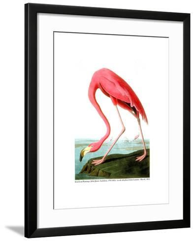American Flamingo, 1834-John James Audubon-Framed Art Print