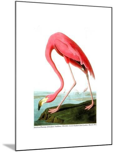 American Flamingo, 1834-John James Audubon-Mounted Giclee Print