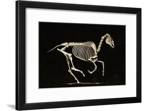 Skeleton of a Running Horse--Framed Art Print