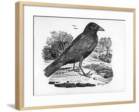 The Carrion Crow, Illustration from 'The History of British Birds' by Thomas Bewick, First…-Thomas Bewick-Framed Art Print