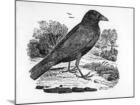 The Carrion Crow, Illustration from 'The History of British Birds' by Thomas Bewick, First…-Thomas Bewick-Mounted Giclee Print