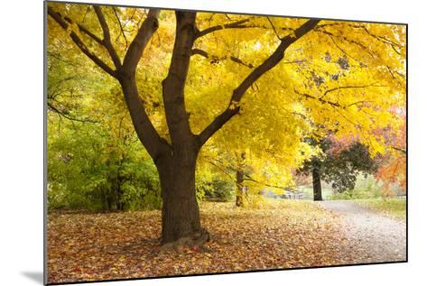 A Maple Tree in Full Colour in Arnold Arboretum, Boston, Usa--Mounted Photographic Print
