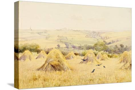 View of a Cornfield with Rooks-Harry E. James-Stretched Canvas Print