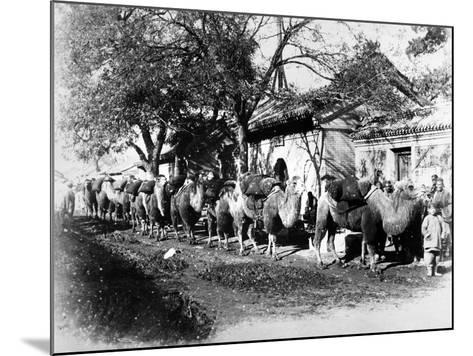 Camel Caravan on the Outskirts of Peking, C.1875--Mounted Photographic Print
