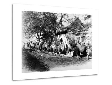 Camel Caravan on the Outskirts of Peking, C.1875--Metal Print