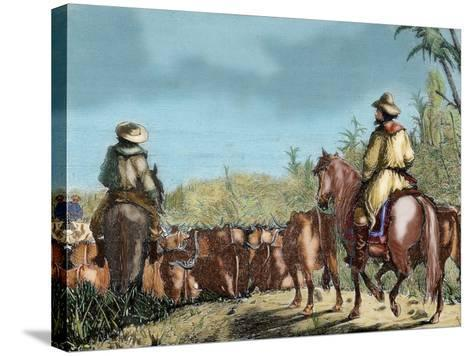 Argentina. Gauchos Driving Cattle--Stretched Canvas Print