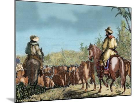 Argentina. Gauchos Driving Cattle--Mounted Giclee Print