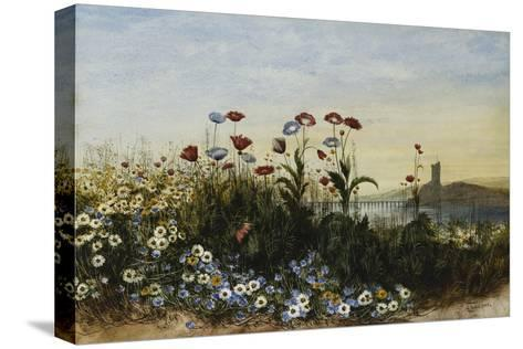 Ferry Carrig Castle, Co. Wexford, Seen Through a Bank of Wild Flowers-Andrew Nicholl-Stretched Canvas Print
