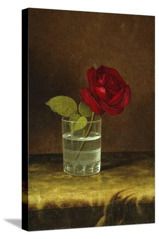 A Red Rose-Martin Johnson Heade-Stretched Canvas Print
