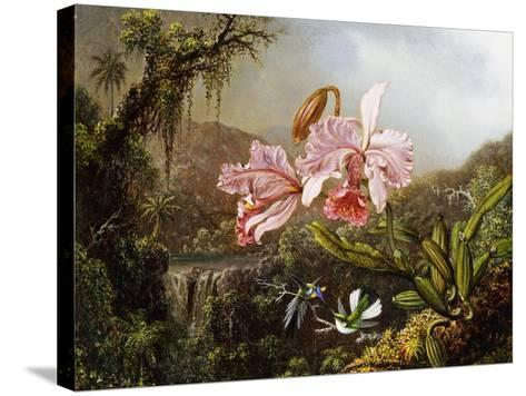 Orchids and Hummingbirds in a Brazilian Jungle, C. 1871-72-Martin Johnson Heade-Stretched Canvas Print