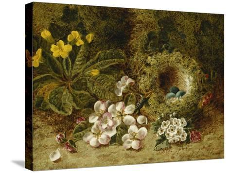 Apple Blossoms, a Primrose and Birds Nest on a Mossy Bank-Oliver Clare-Stretched Canvas Print