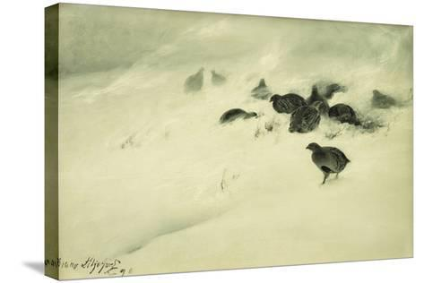 Grouse in a Snow Storm, 1890-Bruno Andreas Liljefors-Stretched Canvas Print