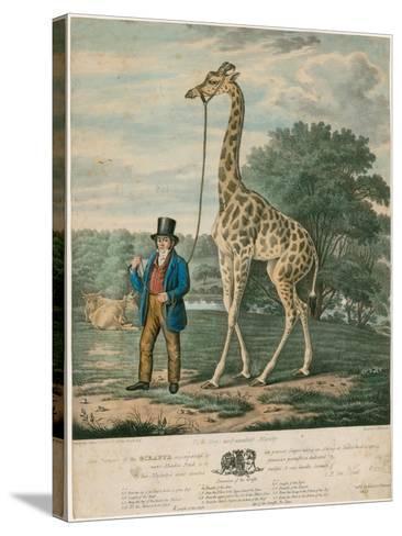 Portrait of the Giraffe, 1827-Abraham Bruiningh van Worrell-Stretched Canvas Print