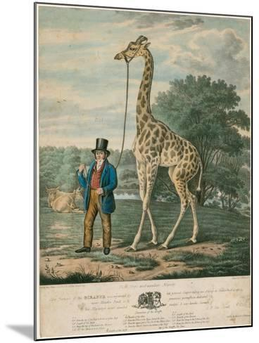 Portrait of the Giraffe, 1827-Abraham Bruiningh van Worrell-Mounted Giclee Print