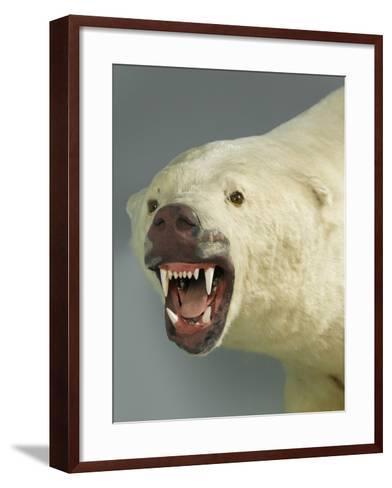 Polar Bear Shot by Cva Peel--Framed Art Print