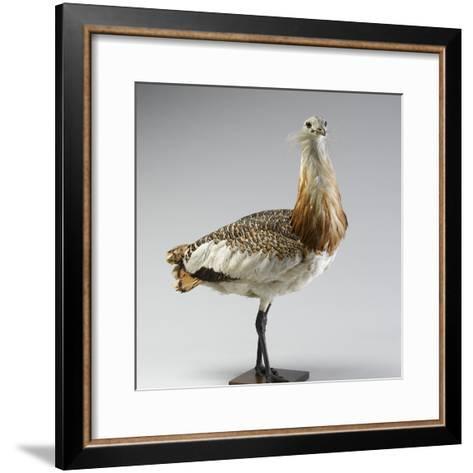 Great Bustard--Framed Art Print