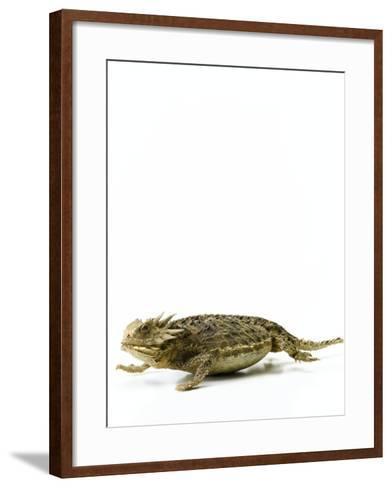 Texas Horned Lizard--Framed Art Print