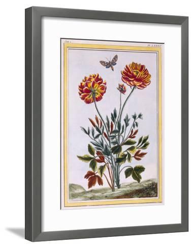 A Variety of Double Flowered Yellow Poppy, C.1776-Pierre-Joseph Buchoz-Framed Art Print