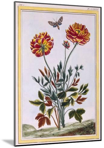A Variety of Double Flowered Yellow Poppy, C.1776-Pierre-Joseph Buchoz-Mounted Giclee Print