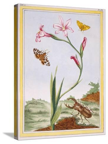 L'Ixia (Flesh-Coloured Ixia) and Stag Beetle, C.1776-Pierre-Joseph Buchoz-Stretched Canvas Print