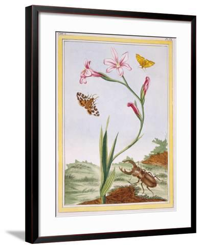 L'Ixia (Flesh-Coloured Ixia) and Stag Beetle, C.1776-Pierre-Joseph Buchoz-Framed Art Print