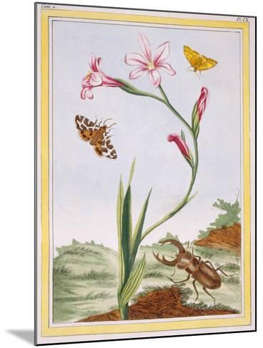 L'Ixia (Flesh-Coloured Ixia) and Stag Beetle, C.1776-Pierre-Joseph Buchoz-Mounted Giclee Print