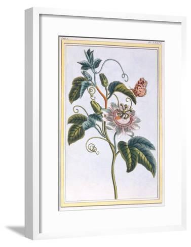 La Grenadille or Le Maracot (Blue Passion Flower), C.1766-Pierre-Joseph Buchoz-Framed Art Print