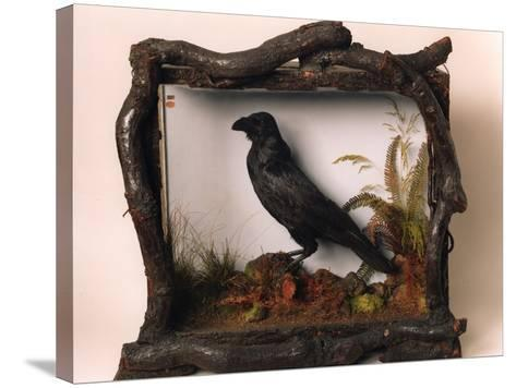 Grip, the Pet Raven of Charles Dickens--Stretched Canvas Print