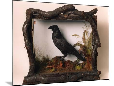 Grip, the Pet Raven of Charles Dickens--Mounted Photographic Print