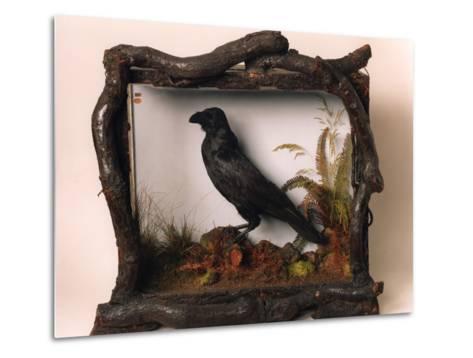 Grip, the Pet Raven of Charles Dickens--Metal Print