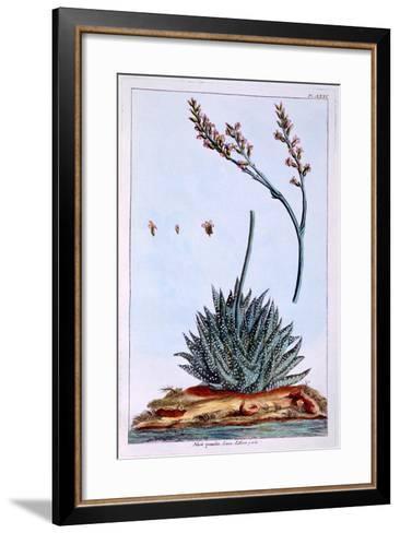 Aloe, Illustration from 'Collection Precieuse Et Enluminee Des Floura', by Pierre Joseph Buchoz,…-Pierre-Joseph Buchoz-Framed Art Print