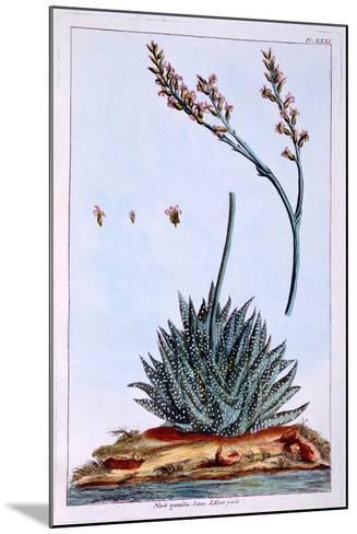 Aloe, Illustration from 'Collection Precieuse Et Enluminee Des Floura', by Pierre Joseph Buchoz,…-Pierre-Joseph Buchoz-Mounted Giclee Print