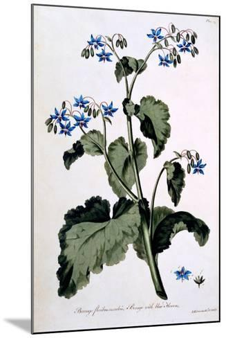 Borage with Blue Flowers, Illustration from 'The British Herbalist', March 1770-John Edwards-Mounted Giclee Print