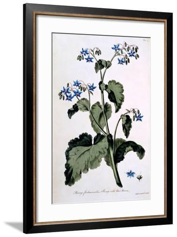 Borage with Blue Flowers, Illustration from 'The British Herbalist', March 1770-John Edwards-Framed Art Print