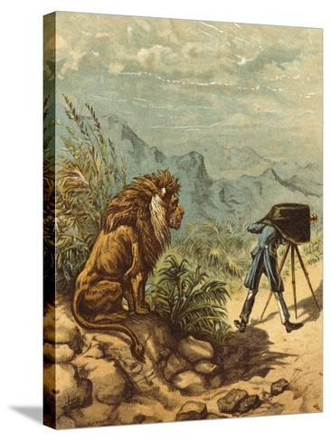 Promising Outlook, Lion Observes Photographer-Ernest Henry Griset-Stretched Canvas Print