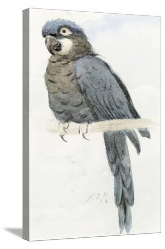 Hyacinth Macaw, C.1890-Henry Stacey Marks-Stretched Canvas Print