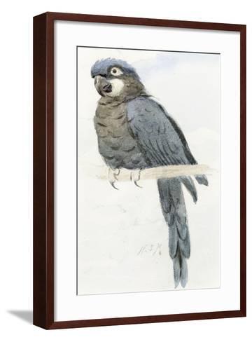 Hyacinth Macaw, C.1890-Henry Stacey Marks-Framed Art Print